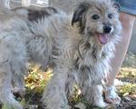 Шаман - лохматый, добрый пёс в добрые руки